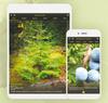 Le CCDMD crée une application mobile pour identifier les plantes vasculaires du Québec